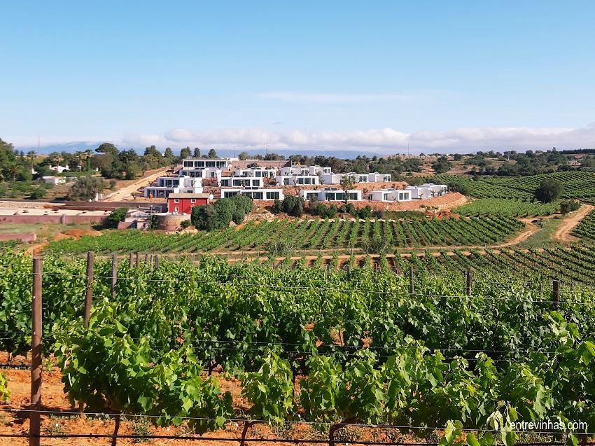 the vines quinta dos vales