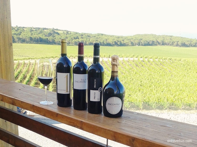entre vinhas enoturismo no inverno