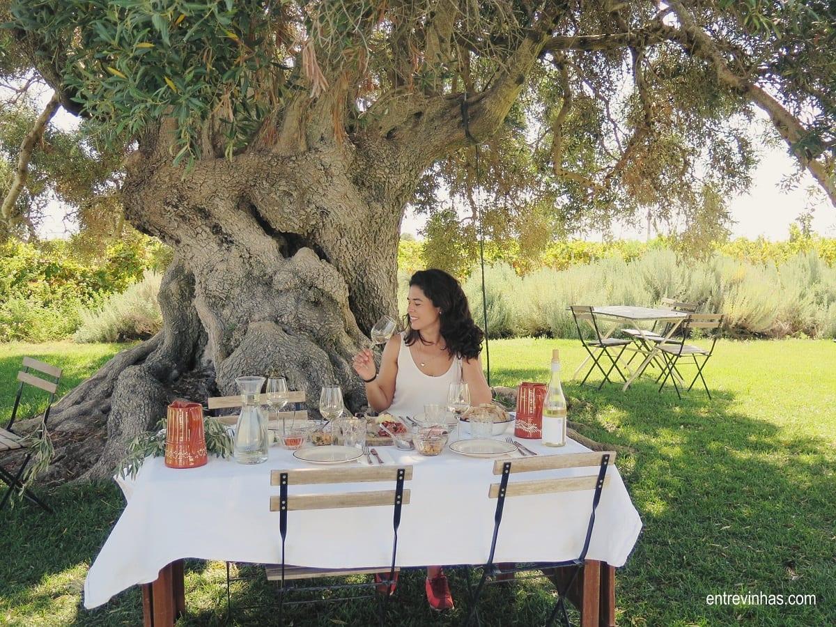 picnic na vinha algarve