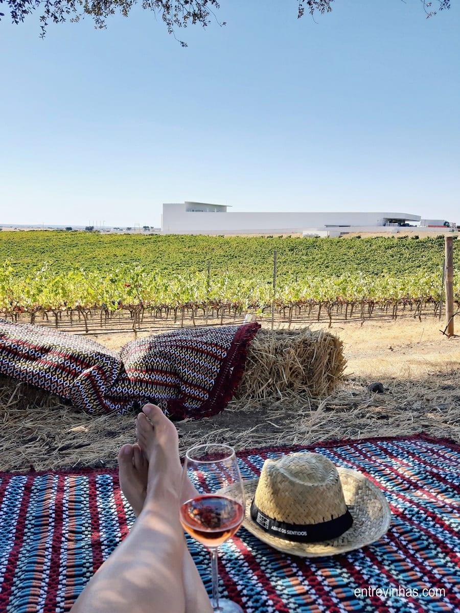 picnic na vinha alentejo
