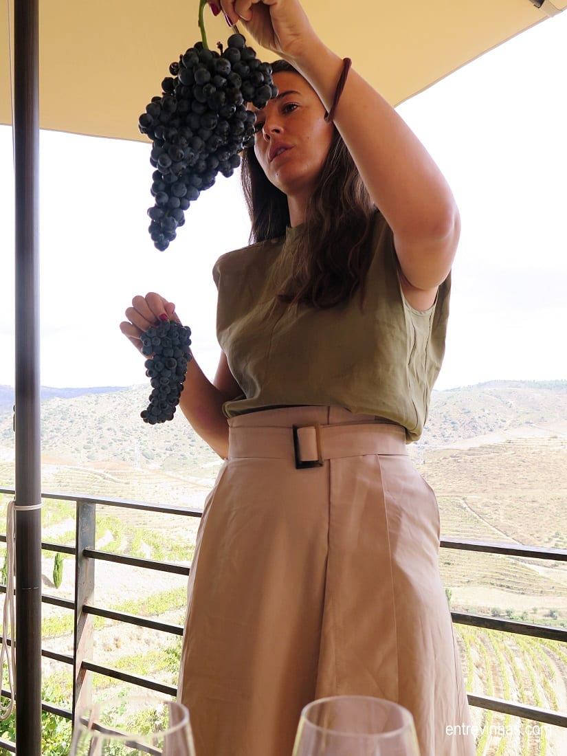 prova de uvas