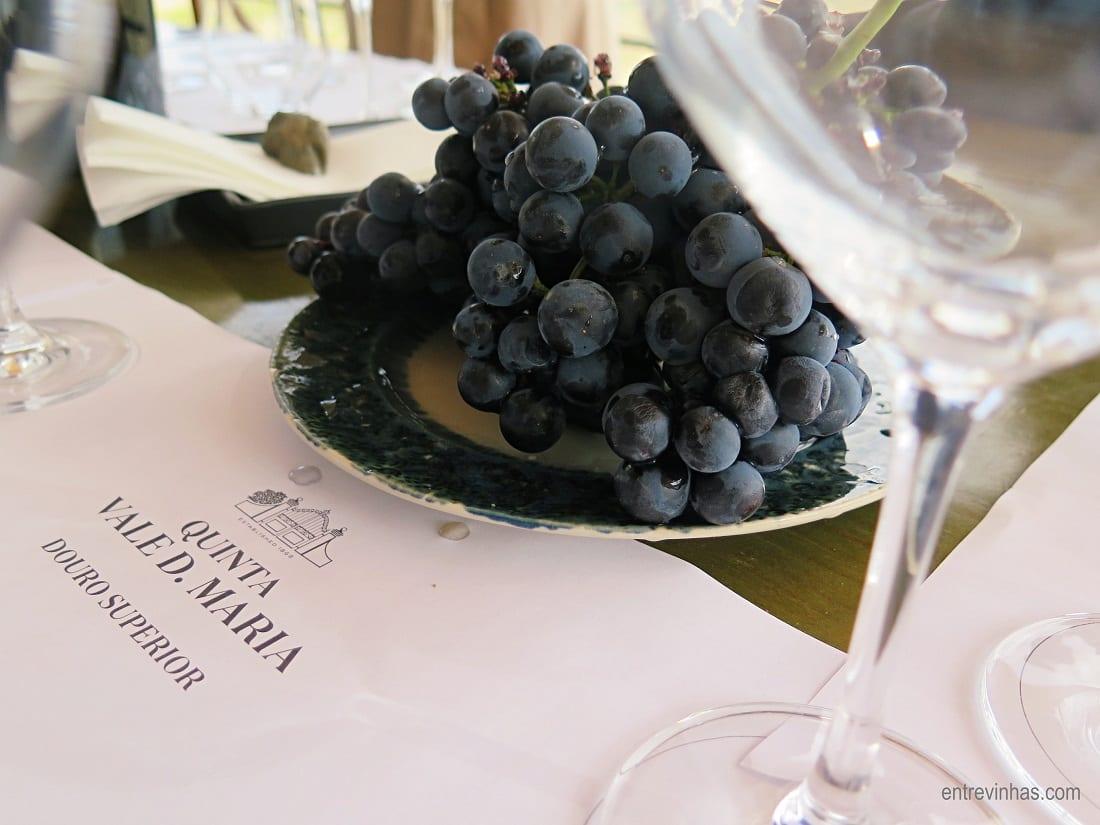 prova de uvas entre vinhas