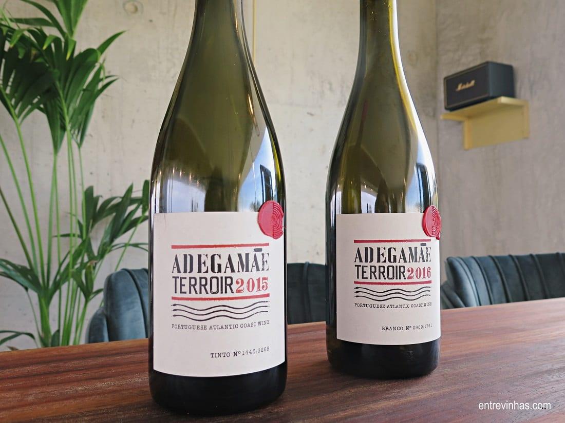 vinhos terroir adega mãe