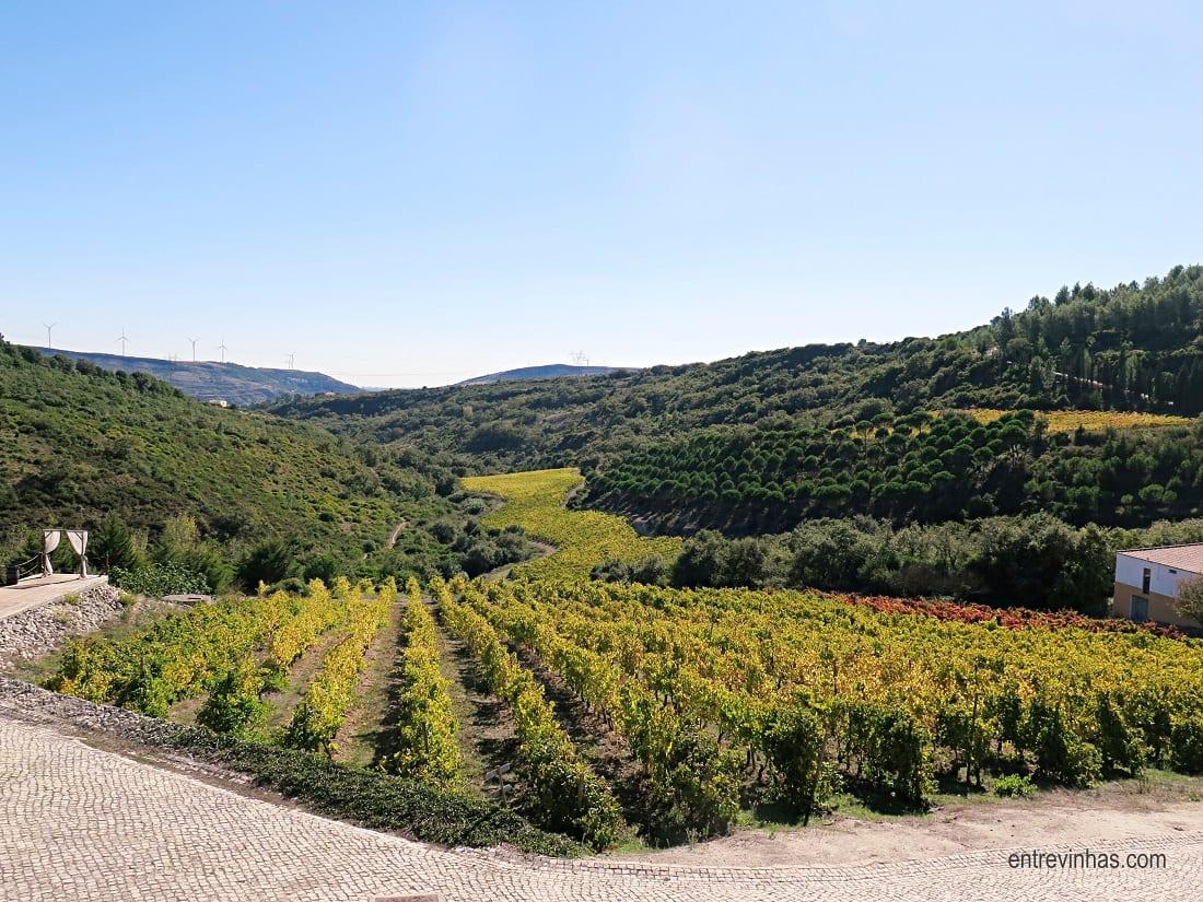 vinhas de arinto