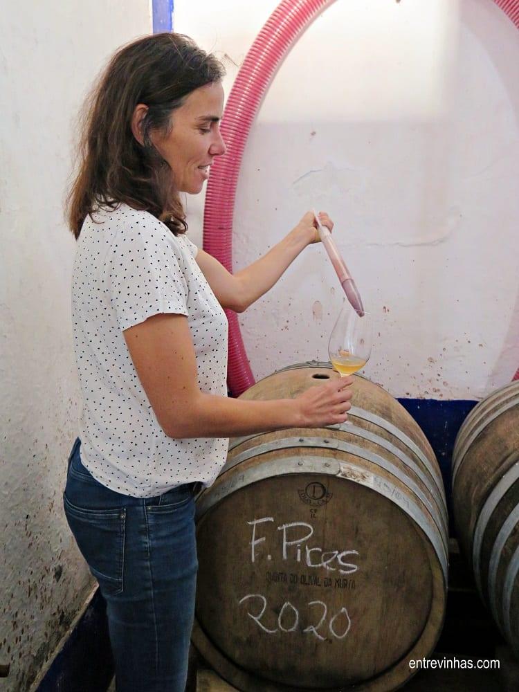 serra oca vinhos