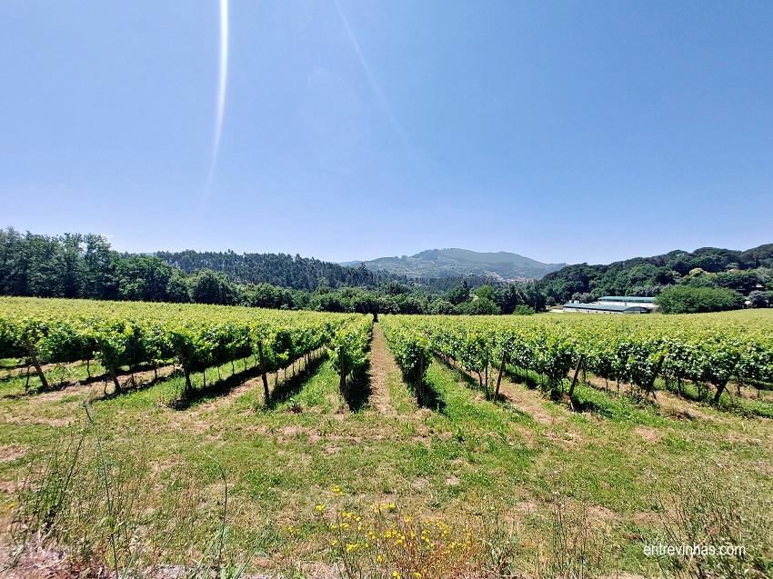 vinhas vinho verde